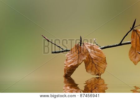 Autumn Leaves Touching Water