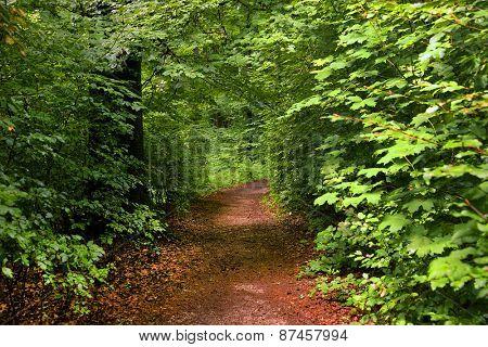 Forest path on the Kapuzinenberg, Salzburg, Europe