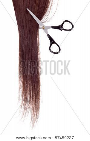 Scissors And Lock Of Hair On A White