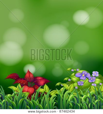 Scene with grass and purple flowers