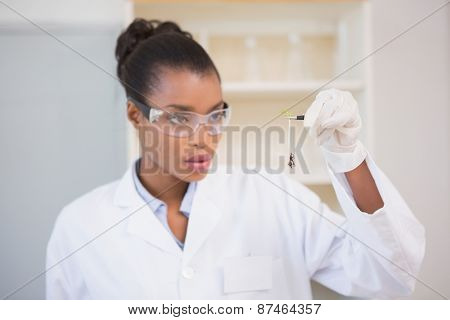 Scientist looking at sprouts in laboratory
