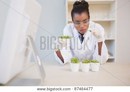 Scientist examining sprouts in laboratory