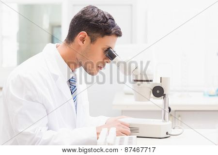 Concentrated scientist observing petri dish with microscope in laboratory