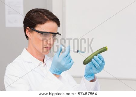 Scientist working attentively with courgette in laboratory