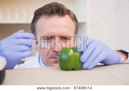 Scientist injecting sweet pepper in the laboratory