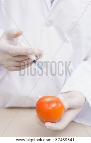 Scientist doing experimentation on tomato in the laboratory