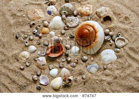 Many Shells On The Sand