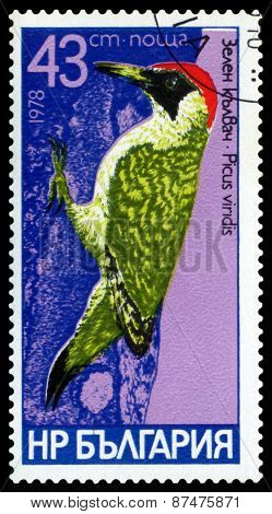Vintage  Postage Stamp.  Bird, Green.