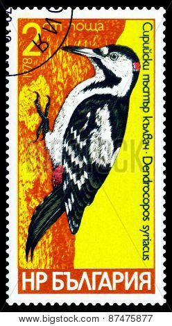 Vintage  Postage Stamp.  Bird Syrian.