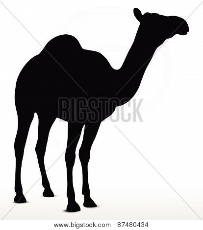 Camel In Default Pose
