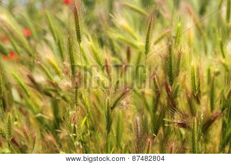 Fluffy grass background