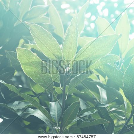 Lush green leaves against sunlight. A beautiful abstract nature background.