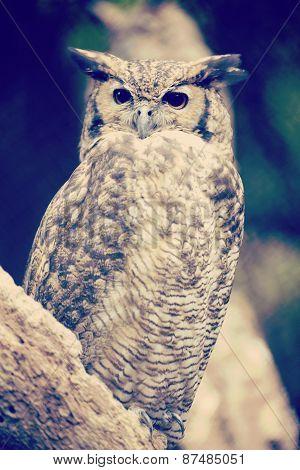 Eagle Owl On A Tree