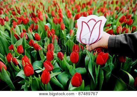Cardboard Tulip In A Field Of Red Tulips