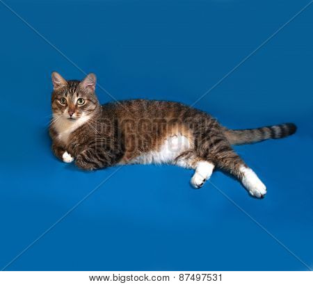Tabby And White Cat Lies On Blue
