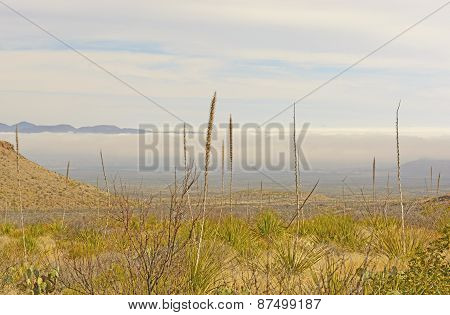 Morning Fog In A Desert Valley
