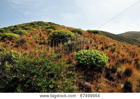 Bushes On The Mountain