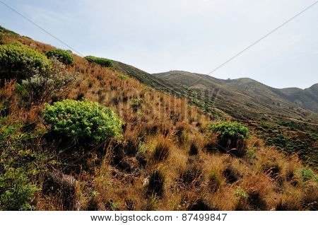 Vegetation On Mountainside