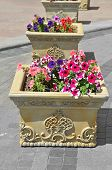 pic of petunia  - Beautiful flowerbed with many bright petunias flower - JPG