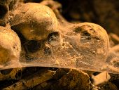 picture of catacombs  - Dark ages skulls in a cemetery Naples - JPG