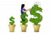 pic of indian money  - Young woman using a scissors for maintaining the growth of money tree isolated on white - JPG