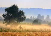 stock photo of muzzy  - A tree in morning light with delicate fog over meadows and hazy forest stripes - JPG