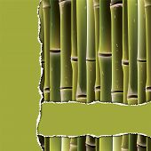 pic of cut torn paper  - Bamboo branches under the green torn paper - JPG