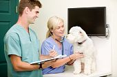 foto of veterinary clinic  - A dog at the vet having a check - JPG