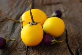 picture of south east asia  - Solanum Aculeatissimum or yellow eggplant usually easy to find in South east Asia - JPG