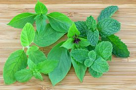 stock photo of mint leaf  - Different types of Basil and Mint leaves on a wooden background  - JPG