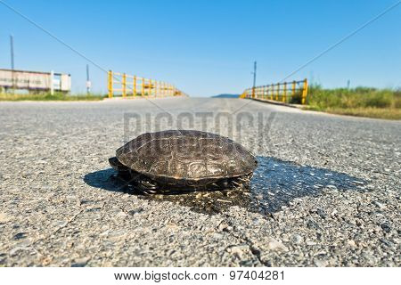 Turtle dangerously crossing the road in front of a small yellow bridge