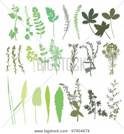 Collection Of Wild Plants