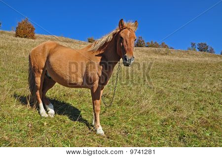 Horse on a hillside.