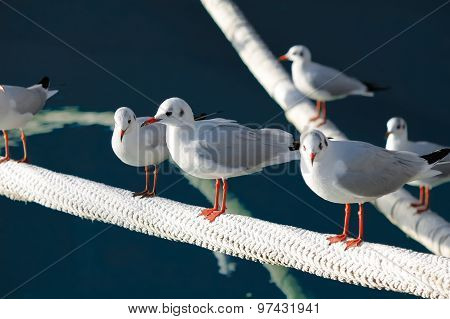 Group Of Gulls Resting By The Sea.