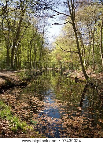 Canal In The Woods