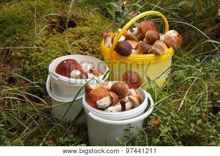 Buckets of mushrooms