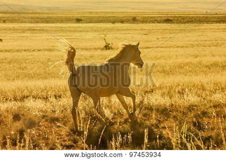 Wild horse running