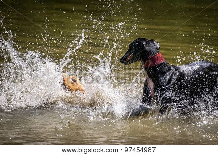 Dogs Playing With Water In A Lake