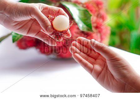 Rambutan In Women's Hands For Her Children.