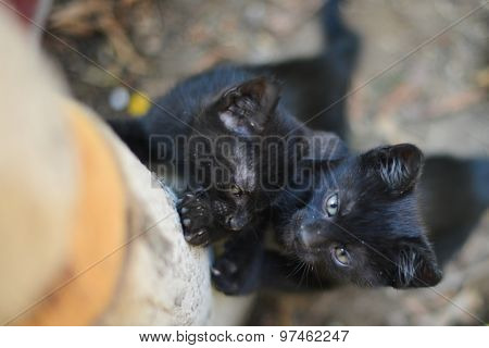 Black cute kittens climb on a tree