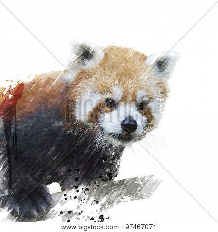 Digital Painting Of Red Panda