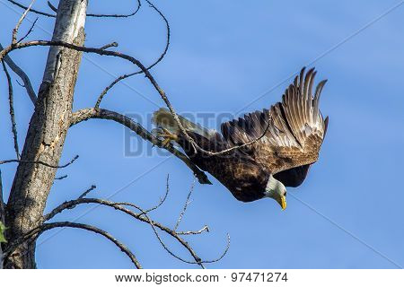 Eagles Takes Off From Branch.
