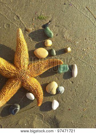 Starfish and pebbles