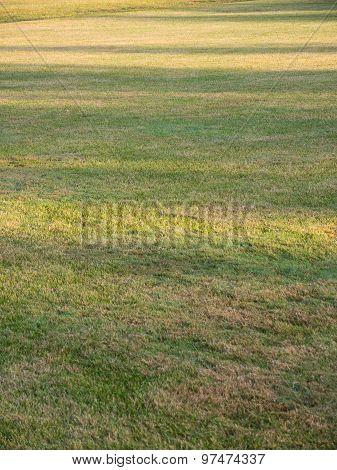 Shadows Lawn