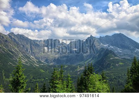 Pine Trees Closeup And Stunning Rocky Mountain Range Behind It On Sunny Summer Day
