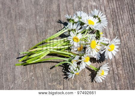 Bouquet Of Chamomiles