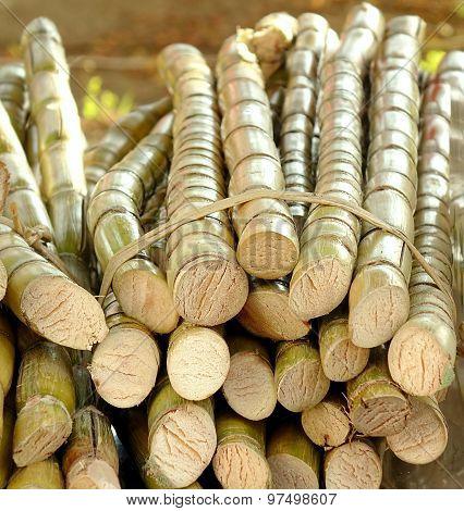 Cut Sugar Cane For Sale