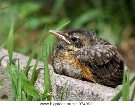 Baby bird sitting