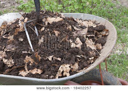Humus Is Mixed With Oak Leaf