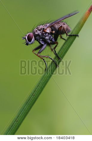 fly on a leaf with green background